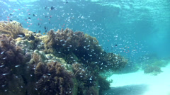 Coral reef with glassfishes and anthias Stock Footage