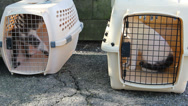 Stock Video Footage of Cats in box crates, exterior shot with pan.