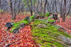 moss on downed trees in hdr high dynamic range - stock photo