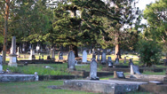 Stock Video Footage of Big Tree in cemetery