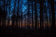 Night Pictures - Dawn sky behind trees Stock Photos