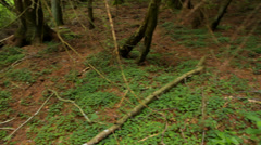 The ancient forest with branches on the ground, swamp, movement Stock Footage