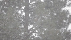 Snowfall with pine trees - stock footage