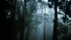 The Haunted  Forest IV Stock Footage