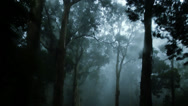 Stock Video Footage of The Haunted  Forest IV