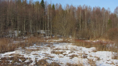 Mixed forest, the end of winter Stock Footage