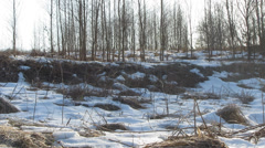 Young forest, the end of winter Stock Footage