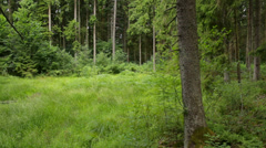 Trees, bushes and grass in the forest, green Stock Footage