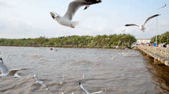 Flying seagull at Bangpoo Stock Footage