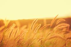 Sunset field, beautiful vibrant color Stock Photos