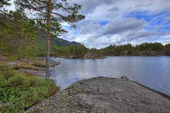 Norwegian woods Stock Photos