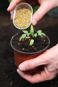 fertilizing young plant - stock photo
