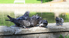 Pigeons on the Fountain closeup Stock Footage