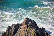 Stock Photo of western portugal ocean coastline. wild birds on a cliff