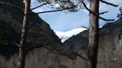Gorge de Verdon Snowy Peak through Pines Stock Footage