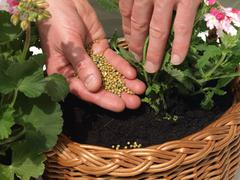 fertilizing, close up - stock photo