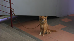 Lonely dog waiting its owner Stock Footage