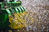 Stock Photo of combine harvester picking cotton