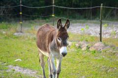 Landscape brown donkey in field Stock Photos