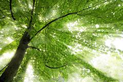 Stock Photo of Sunbeam
