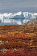The Kangia icefjord - stock photo