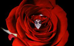 A diamond engagement ring nestled inside a red rose - stock photo