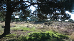 Heathland in Soft Sunlight 2 Stock Footage