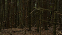 Tree trunks without leaves in the forest, bald, panning Stock Footage