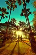 Beautiful sunset with sun beams at park with tropical palm trees Stock Photos
