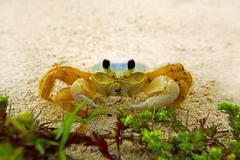 Ghost crab Stock Photos