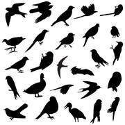 Birds silhouettes - stock illustration