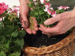 fertilizing - stock photo