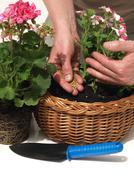 man fertilizing - stock photo