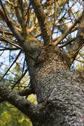 Looking up at a tree. Stock Photos
