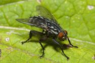 Stock Photo of common fly on a leaf