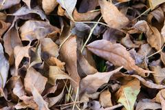 Dry fallen autumn leaves background Stock Photos