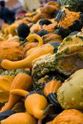 halloween gourds - stock photo