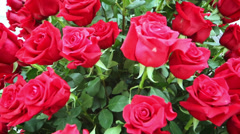 Large bright bouquet of freshly cut big beautiful red roses Stock Footage