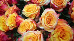 Close-up bright bunch of freshly cut beautiful orange roses Stock Footage