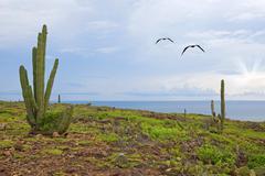 Aruba landscape - stock photo