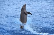 Stock Photo of Dolphin