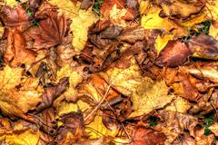 colorful autumn leaves background in hdr high dynamic range - stock photo
