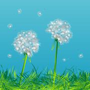 Dandelions Stock Illustration
