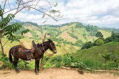 donkey and hills - stock photo
