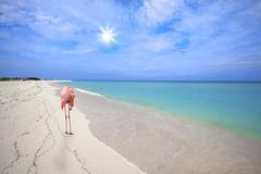 Flamingo at the beach - stock photo