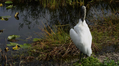 Preening Wood Stork in the Everglades National Park Stock Footage
