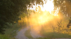 The road in the rural landscape in the evening in summer, sun rays Stock Footage