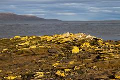coastline falkland islands - stock photo