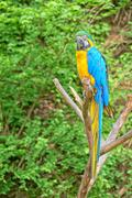Macaw on the branch Stock Photos