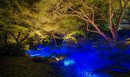 Stock Photo of seasonal illuminations at rikugien garden, tokyo, japan